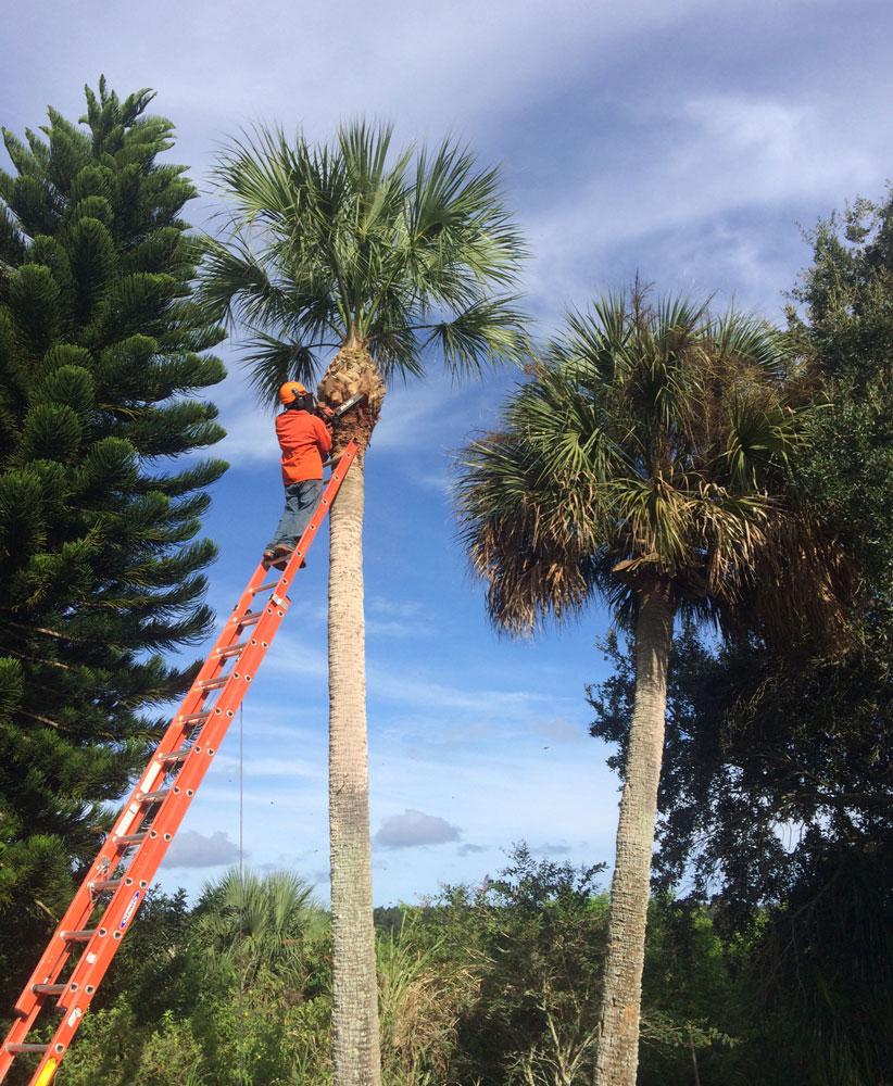 Arbor care Florida